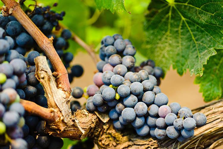 Tenute Rubino wijn