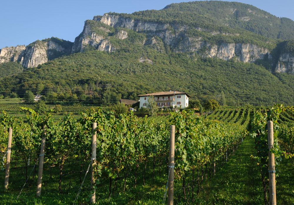 Wijnhuis Brunnenhof in Trentino - Zuid Tirol
