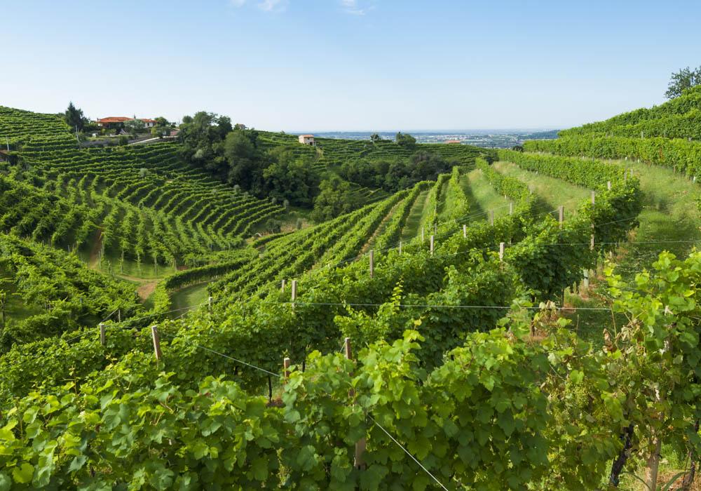 Wijnregio Trentino in Italie
